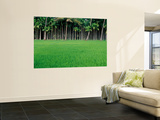 Rice Field with Betel Nut Trees in Background Print by Kevin Clogstoun