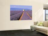 Lavender Fields, Provence, France Prints by Jon Arnold