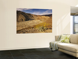 Brittlebush Blooming in Spring at Darwin Canyon Near Panamint Valley Posters by Witold Skrypczak