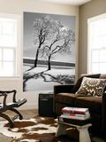 Trees in the Snow Plakat af Alfred Eisenstaedt