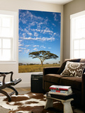 Acacia Trees under Blue Sky with Clouds Posters by Sean Caffrey
