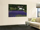Lavender Fields. Posters by Doug McKinlay