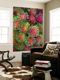 Rambutan for Sale at or Tor Kor Market Prints by Austin Bush