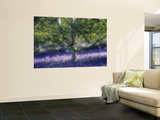 Bluebell and Silver Birch Print by Jon Arnold