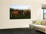 Horses Grazing in Front of Ahu Vai Uri, Tahai and Ko Te Riku Posters par Paul Kennedy