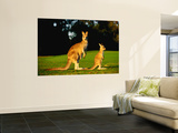 Kangaroo and Joey Prints by John Banagan