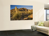 Parrys Beargrass in Springtime Bloom in Kingston Range Mountains of Mojave Desert Prints by Witold Skrypczak
