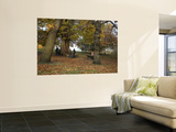 Greenwich Park in Autumn Print by Doug McKinlay