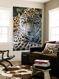 Wildlife in Belize, Jaguar Poster par Jane Sweeney
