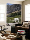 Mountain Goat (Oreamnos Americanus) Posters by Mark Newman
