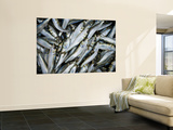 Sardines at the Fish Market Prints by Greg Elms