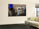 Chalk Drawn Number on Elephant Hide at Elephant Polo King's Cup Prints by Felix Hug