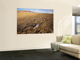 Feather on Cracked Playa of Alvord Desert Posters by Tyler Roemer