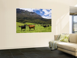 Cows in Lush Pastures and the Rocky Peak of Mt Roland Print by Glenn Van Der Knijff