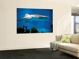 Excited School Children Gazing at Whale Shark at Osaka Aquarium Prints by Antony Giblin