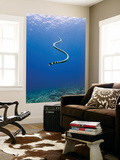 Banded Sea Snake from Rear Posters by Johnny Haglund