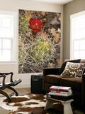 Claret Cup Cactus in Bloom Prints by John Elk III