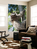 Sloth Living in Parque Centenario Print by Margie Politzer
