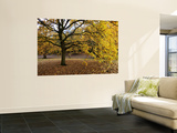 Autumn in Greenwich Park Print by Doug McKinlay