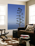 An Agave Plant (Agave Americana), Overlooking Pacific Ocean Prints by Brent Winebrenner