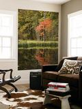 Shayne Hill - Autumn Colour and Reflection in Pond, Hokkaido University Forest Plakát