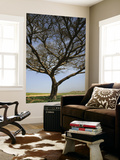 Acacia Raddiana Tree by Besor Scenic Road Prints by Hanan Isachar