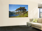 Scots Pines on Shore of Loch Hourn, Knoydart Peninsula Prints by Feargus Cooney