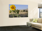 Sunflower Growing at Micro-Oasis of Qasr Al Labakha, Near Al Kharga Prints by Michael Benanav