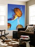 Jellyfish in Monterey Bay Aquarium Print by Douglas Steakley