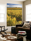 Autumn in the Tamar Valley Vineyards Posters by Andrew Bain