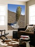 Blooming Silversword (Ahinaahina) Plant in Crater Art by John Elk III