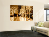 Trees Decorated with Lights at Night Print by Richard l'Anson