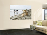 Dog Resting and Surfers Walking Along Beach at Anchor Point Prints by Christian Aslund