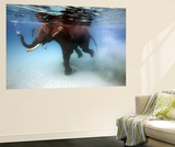 Elephant 'Rajes' Taking Swim in Sea Print by Johnny Haglund