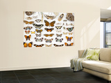 Butterfly Collection at Finca Hartmann Posters by Alfredo Maiquez