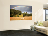 Sheep Grazing under Rainbow Posters by Andrew Bain