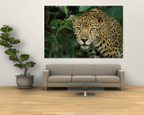 A Jaguar Pauses in the Foliage Art by Steve Winter