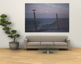 A Seagull Pauses Momentarily on a Wooden Fence Used for Dune Control Print by Stacy Gold