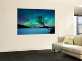 Aurora Boreal sobre el lago Sandvannet en Troms County, Noruega Pósters por Stocktrek Images