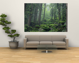 Moss-Covered Rocks Fill a Misty Wooded Hillside Posters