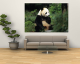 A Giant Panda Smelling a Flower, National Zoo, Washington D.C. Posters by Taylor S. Kennedy