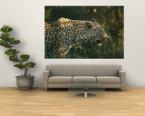 A Leopard Stalks its Prey Prints by Nicole Duplaix