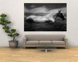 Tim Lynch - White Horse Swimming Umělecké plakáty