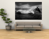 White Horse Swimming Print by Tim Lynch