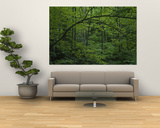 A Lush Green Eastern Woodland View Plakater af Bates Littlehales