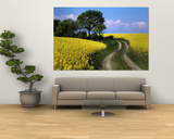 Canola, Farm, Yellow Flowers, Germany Posters