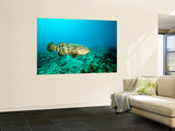 A Goliath Grouper Effortlessly Floats by a Shipwreck Off the Coast Key Largo, Florida Poster by  Stocktrek Images