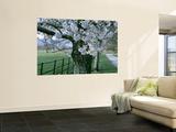 Cherry Trees and Path, Killaney, Ireland Prints