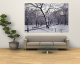 Bare Trees During Winter in Central Park, Manhattan, New York City, New York, USA Posters