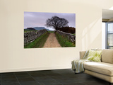 Stone Walls Along a Path, Yorkshire Dales, England, United Kingdom Posters